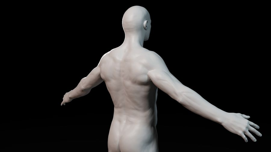 Modèle d'anatomie royalty-free 3d model - Preview no. 9