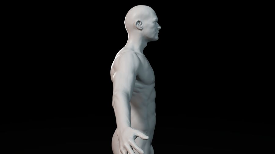 Modèle d'anatomie royalty-free 3d model - Preview no. 8