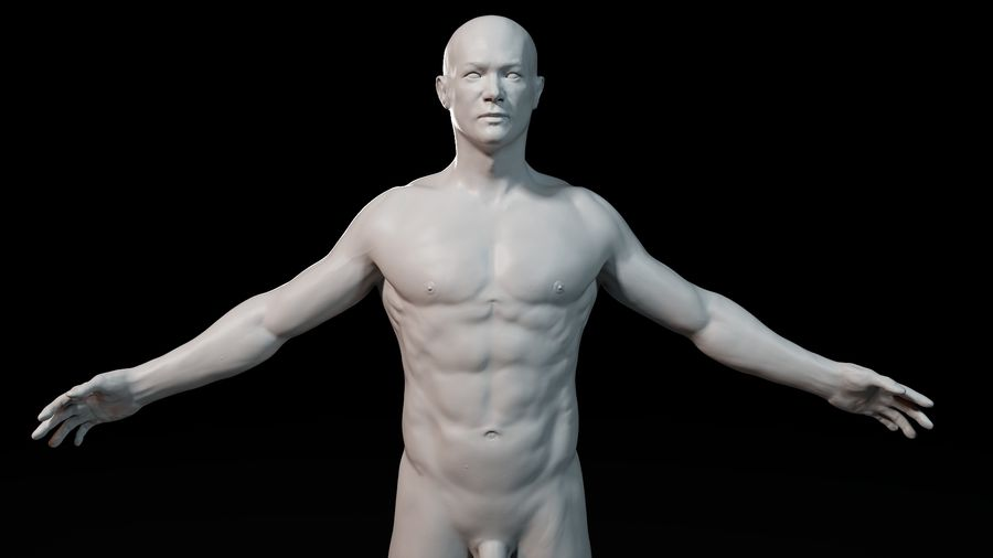 Modèle d'anatomie royalty-free 3d model - Preview no. 6