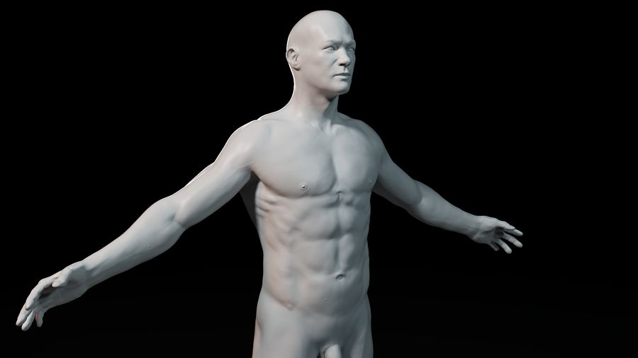 Modèle d'anatomie royalty-free 3d model - Preview no. 7