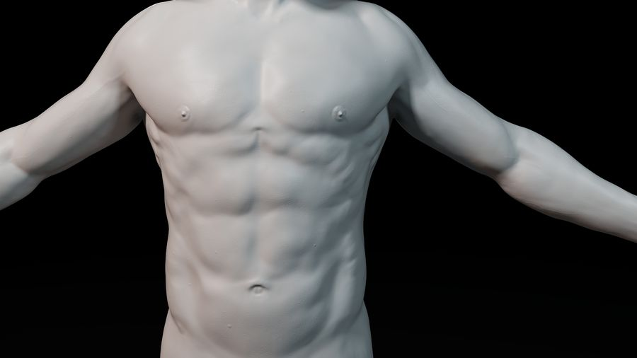 Modèle d'anatomie royalty-free 3d model - Preview no. 11