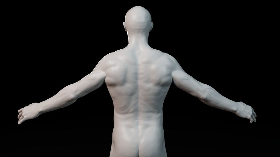 Modèle d'anatomie royalty-free 3d model - Preview no. 10