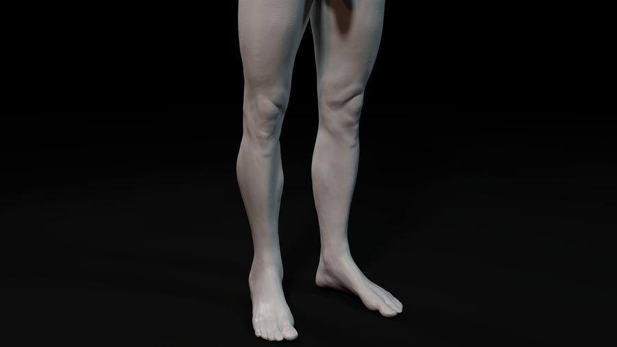 Modèle d'anatomie royalty-free 3d model - Preview no. 12