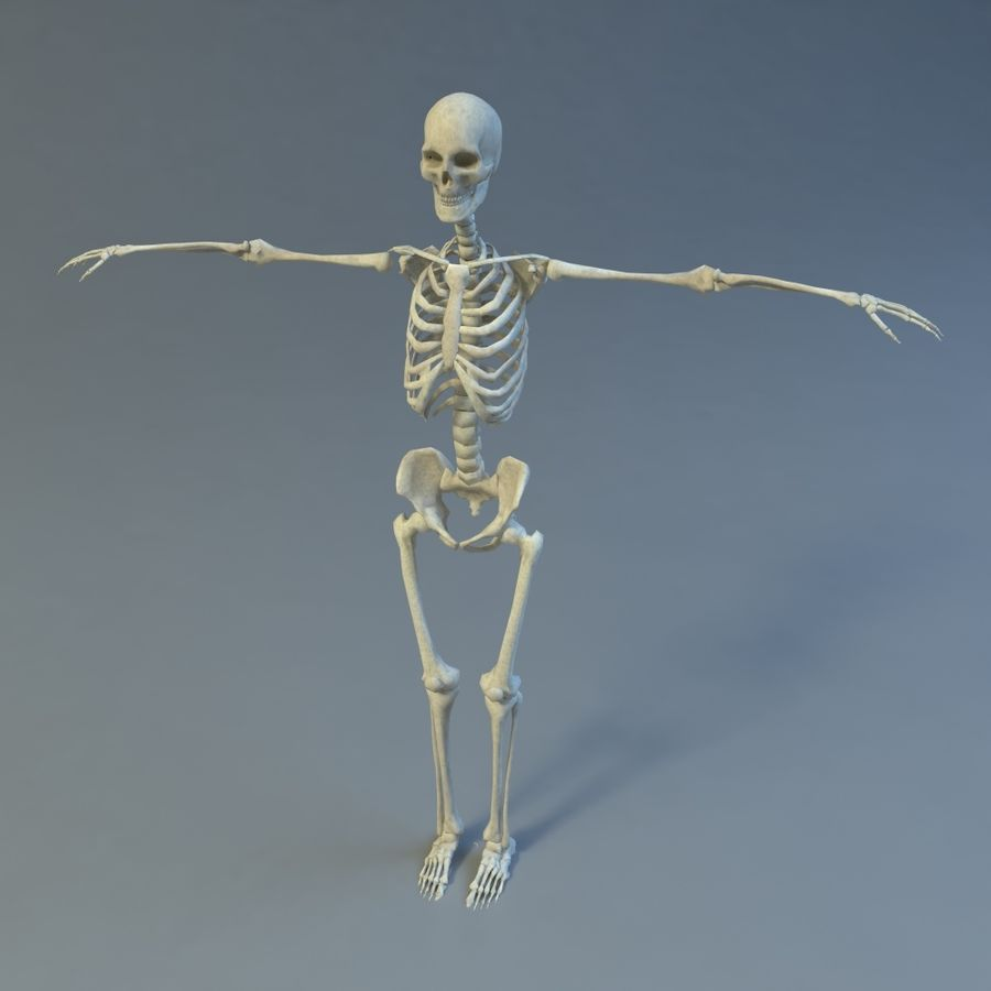 Skeleton royalty-free 3d model - Preview no. 1