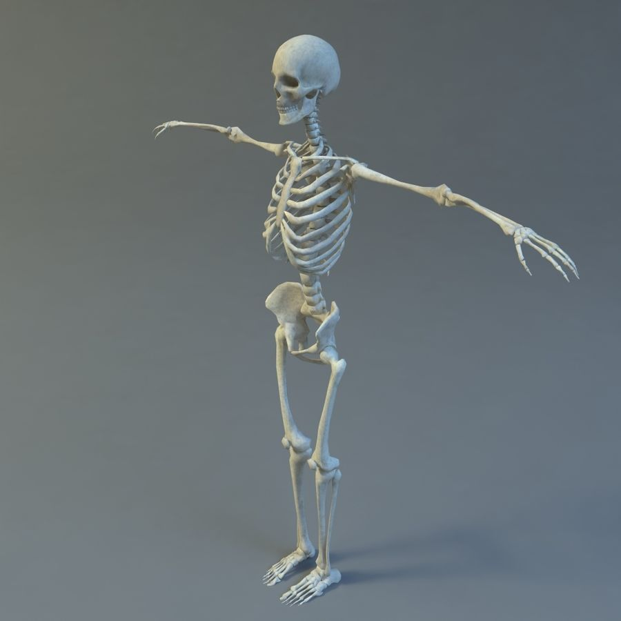 Skeleton royalty-free 3d model - Preview no. 2