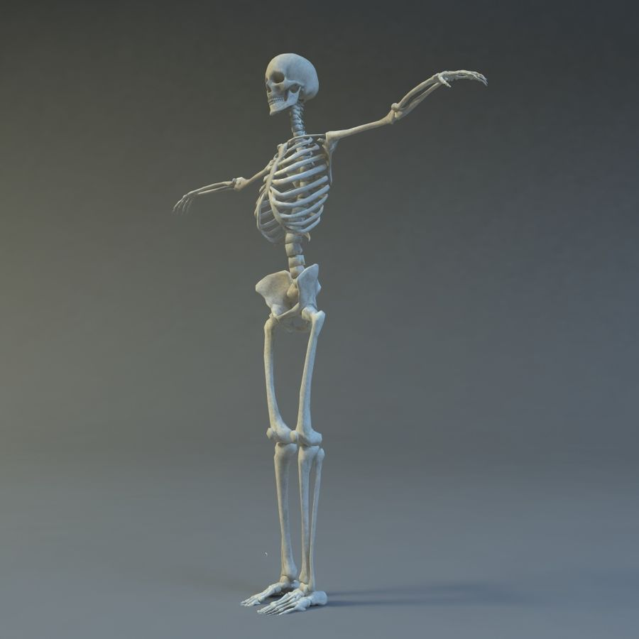 Skeleton royalty-free 3d model - Preview no. 4