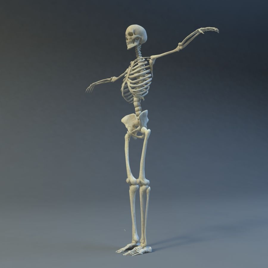 Skeleton royalty-free 3d model - Preview no. 9