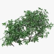 Small Bush Shrubs 3d model