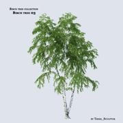 Birch tree 03 3d model