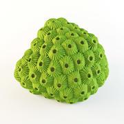 Coral estrella modelo 3d