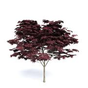Dark Red Maple 3d model