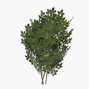 Game ready shrub one 3d model