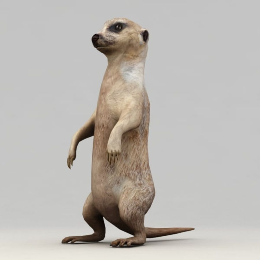Meerkat Animated royalty-free 3d model - Preview no. 6