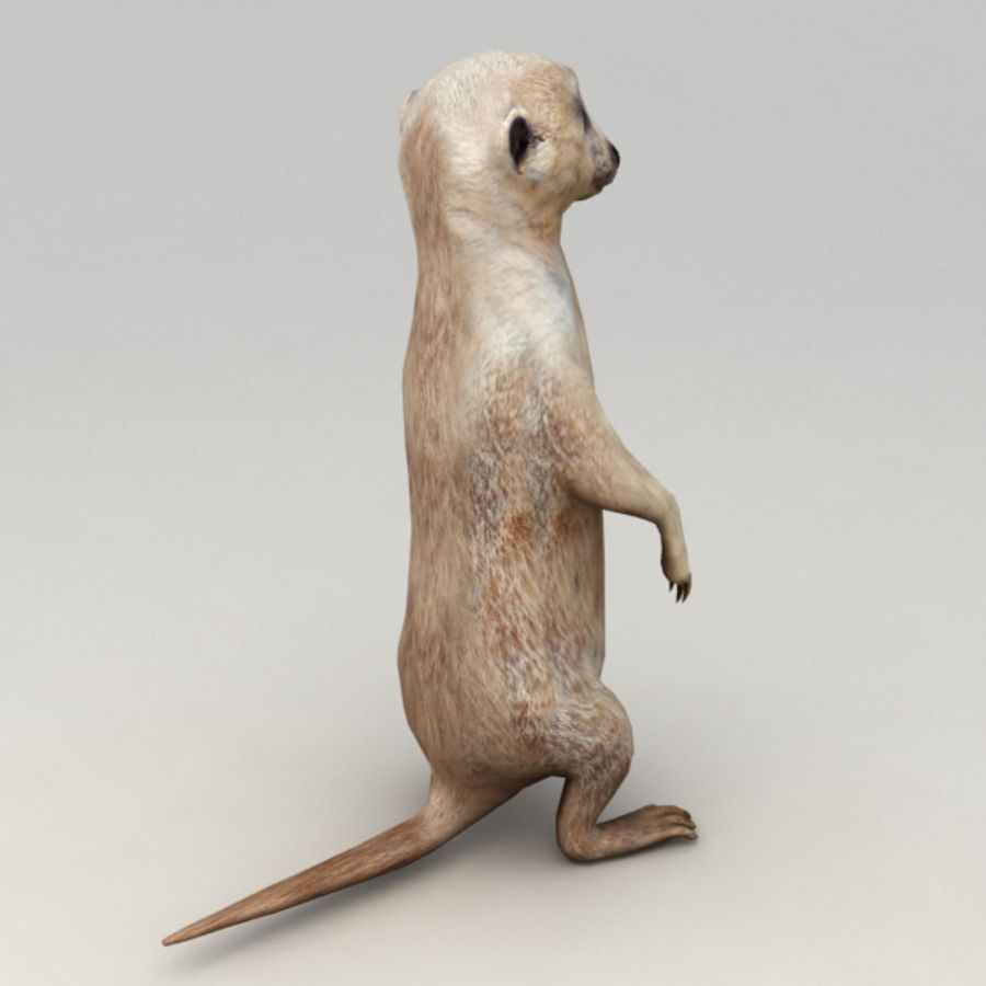 Meerkat Animated royalty-free 3d model - Preview no. 3