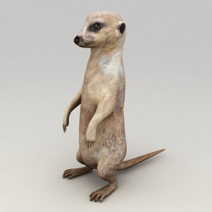 Meerkat Animated royalty-free 3d model - Preview no. 2