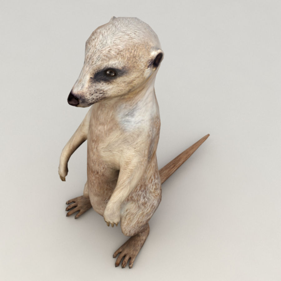Meerkat Animated royalty-free 3d model - Preview no. 5