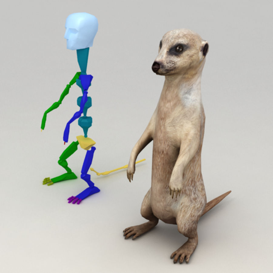 Meerkat Animated royalty-free 3d model - Preview no. 7