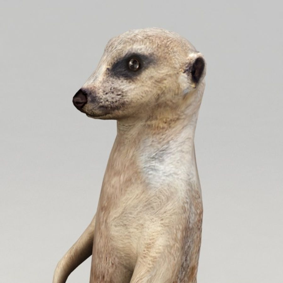 Meerkat Animated royalty-free 3d model - Preview no. 4