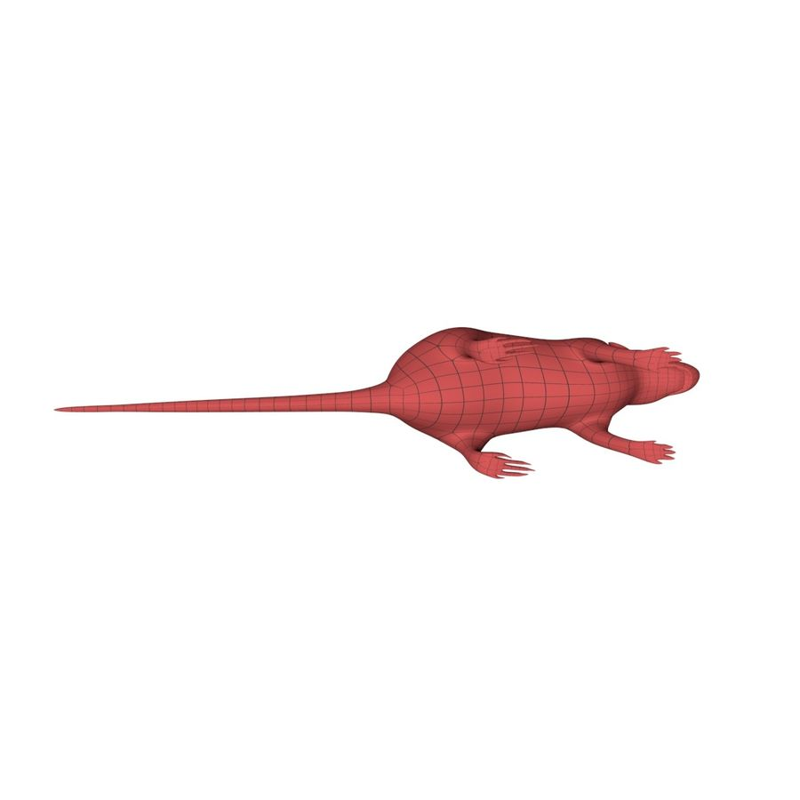 Rat Mouse base mesh royalty-free 3d model - Preview no. 5