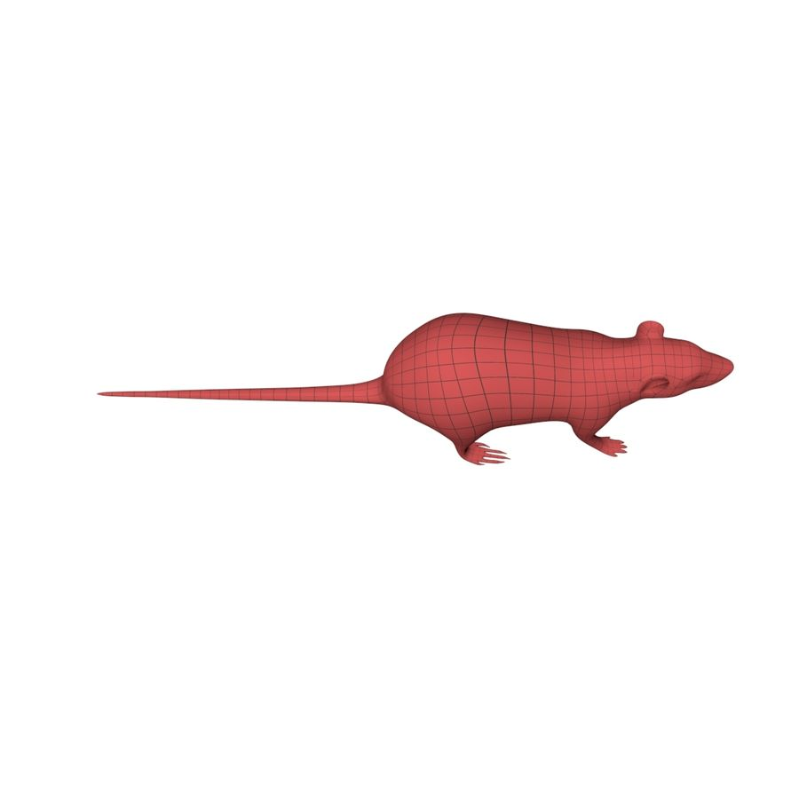 Rat Mouse base mesh royalty-free 3d model - Preview no. 4