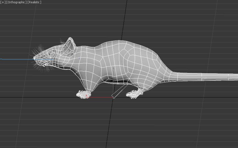 Rat royalty-free 3d model - Preview no. 8
