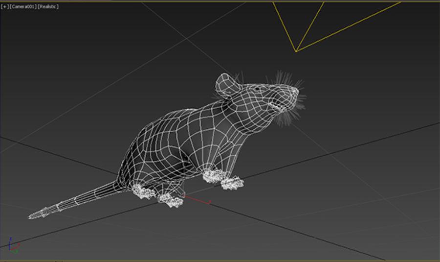 Rata royalty-free modelo 3d - Preview no. 7