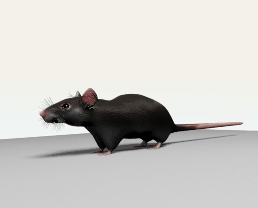 Rata royalty-free modelo 3d - Preview no. 4