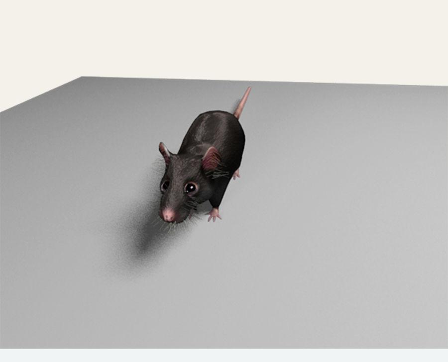 Rat royalty-free 3d model - Preview no. 5