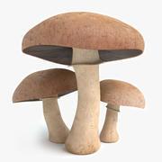 Portobello Mushrooms 3d model