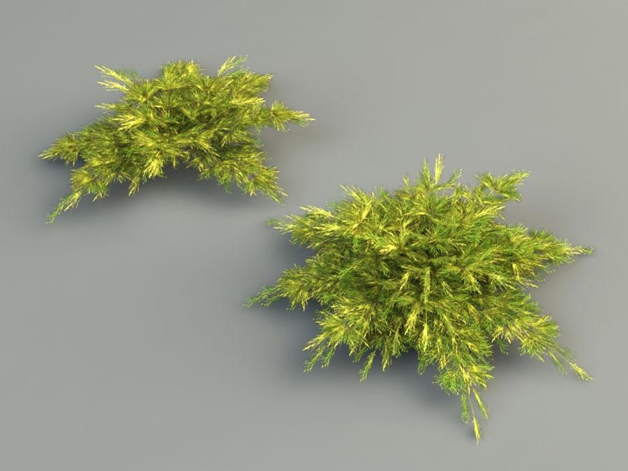 juniperus pfitzeriana aurea juniper royalty-free 3d model - Preview no. 2