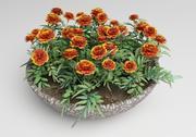 Tagetes Ringelblume 3d model