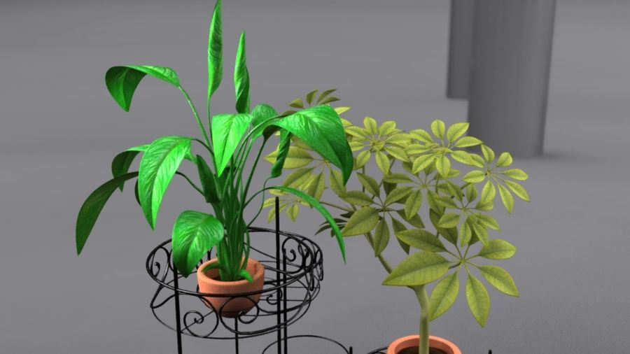House plants royalty-free 3d model - Preview no. 1