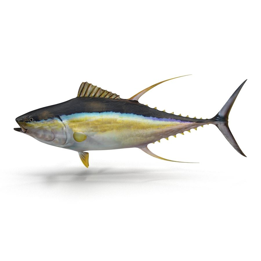 Yellowfin Tuna 3D Model $18 - .max .oth .obj - Free3D