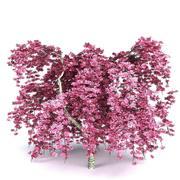 Cherry Tree v1 3d model