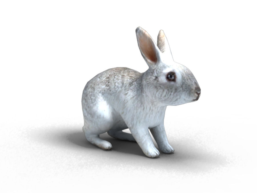 lapin lapin animal lièvre royalty-free 3d model - Preview no. 2