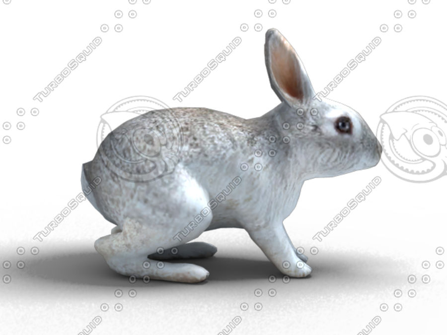lapin lapin animal lièvre royalty-free 3d model - Preview no. 1