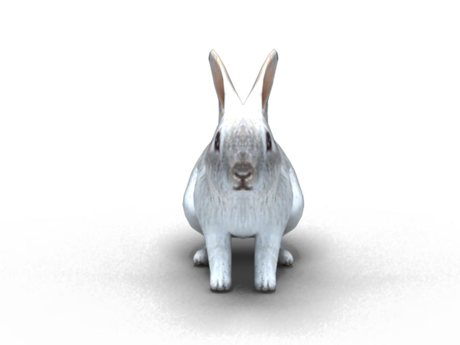 lapin lapin animal lièvre royalty-free 3d model - Preview no. 3