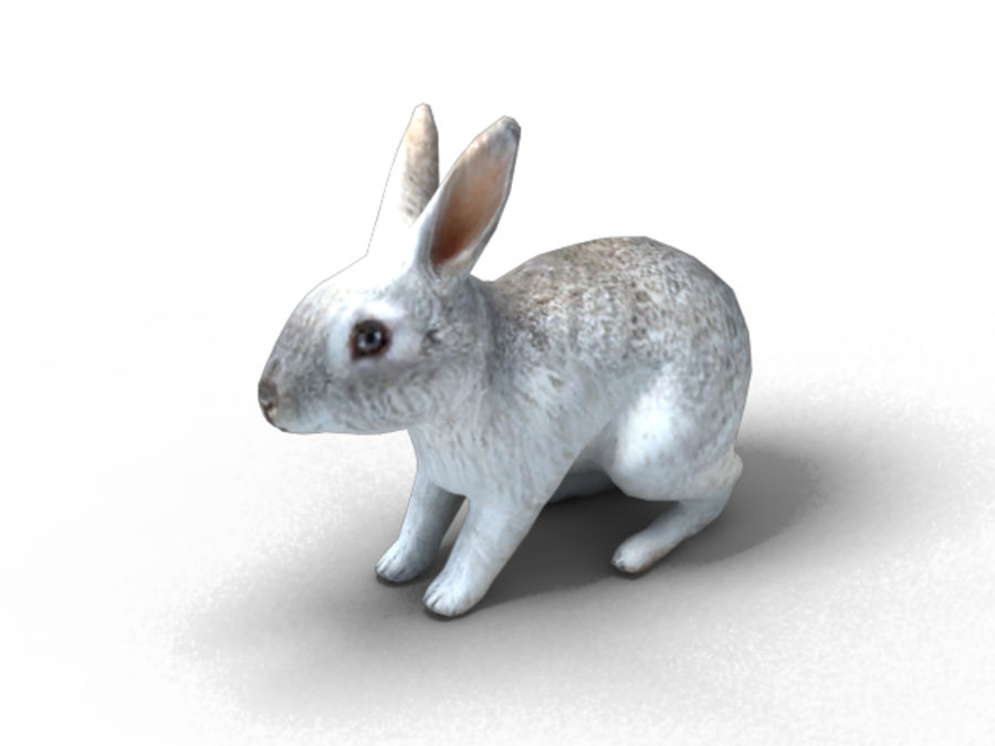 lapin lapin animal lièvre royalty-free 3d model - Preview no. 4