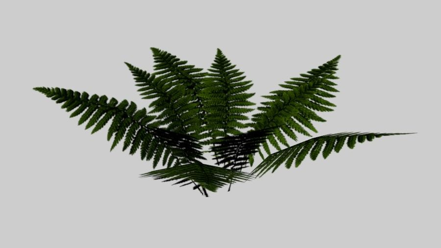 Fern royalty-free 3d model - Preview no. 2