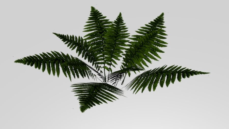 Fern royalty-free 3d model - Preview no. 1