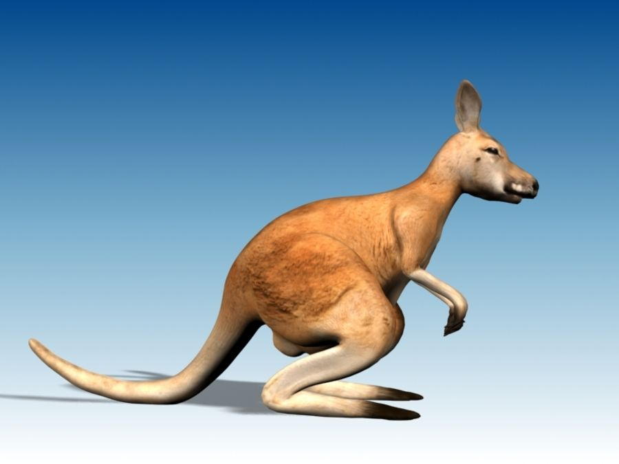 Kangaroo 3D Model Rigged Animated royalty-free 3d model - Preview no. 8