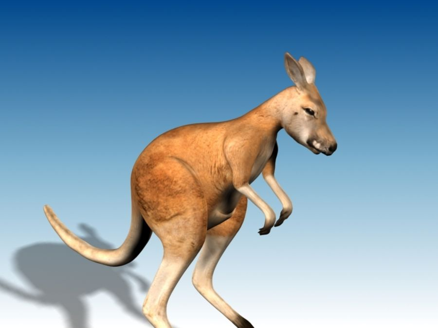 Kangaroo 3D Model Rigged Animated royalty-free 3d model - Preview no. 7
