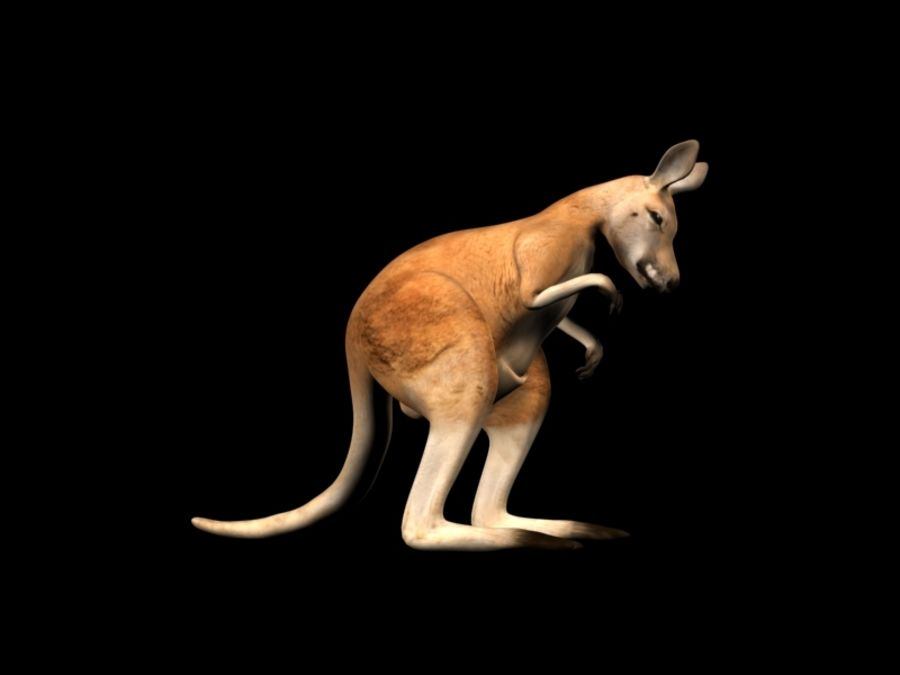 Kangaroo 3D Model Rigged Animated royalty-free 3d model - Preview no. 10