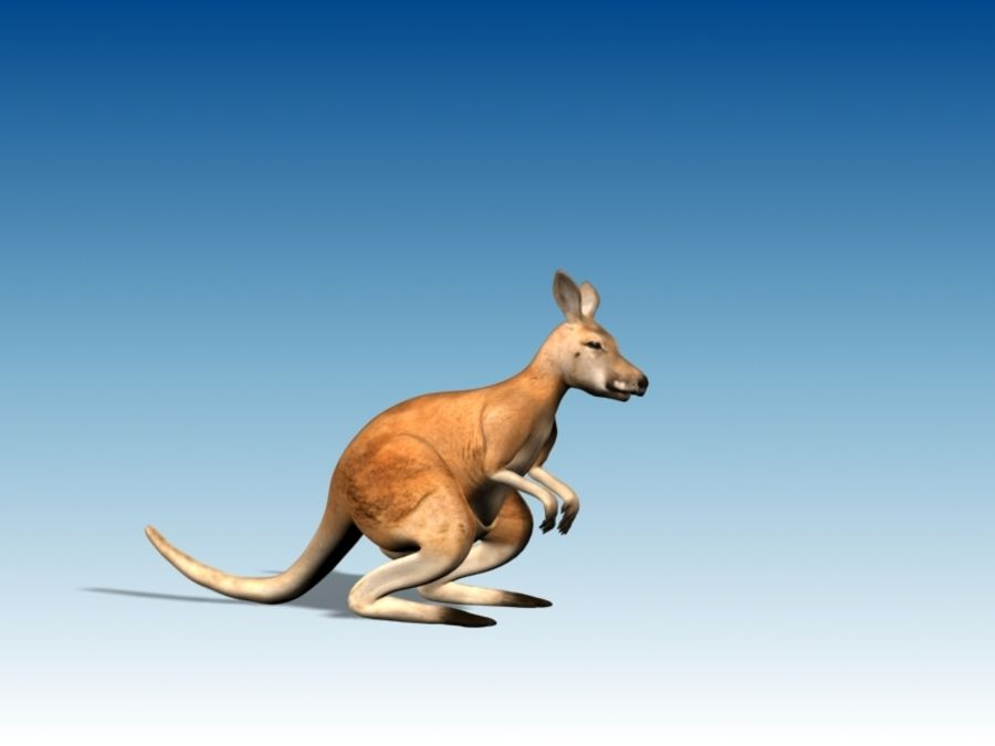 Kangaroo 3D Model Rigged Animated royalty-free 3d model - Preview no. 4