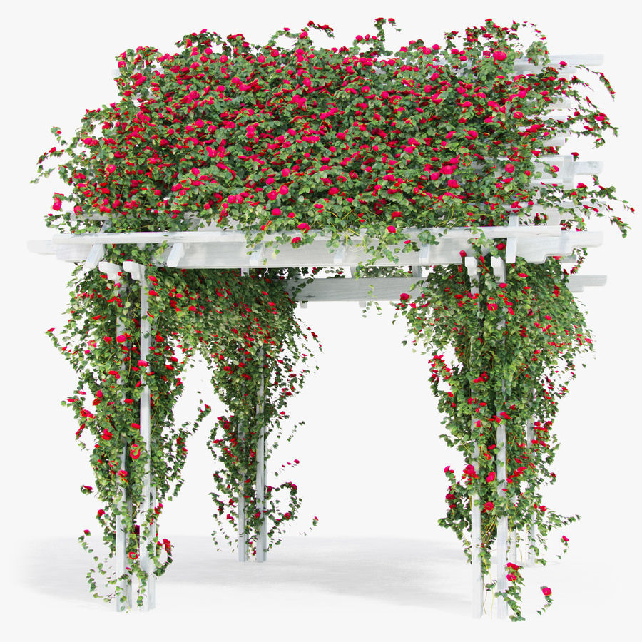 Pergola Climbing Roses With Flowers Ivy Wooden royalty-free 3d model - Preview no. 4