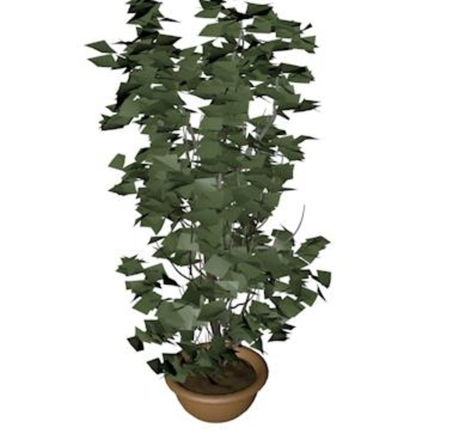 Plant in bloempot royalty-free 3d model - Preview no. 4