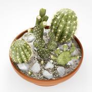 仙人掌花园 3d model