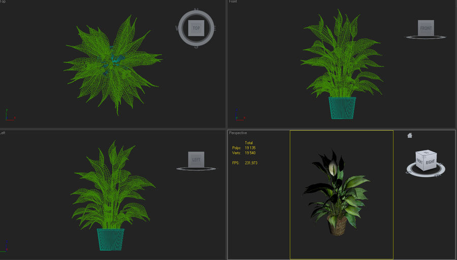 Spathiphyllum, Spath, peace lilies royalty-free 3d model - Preview no. 6