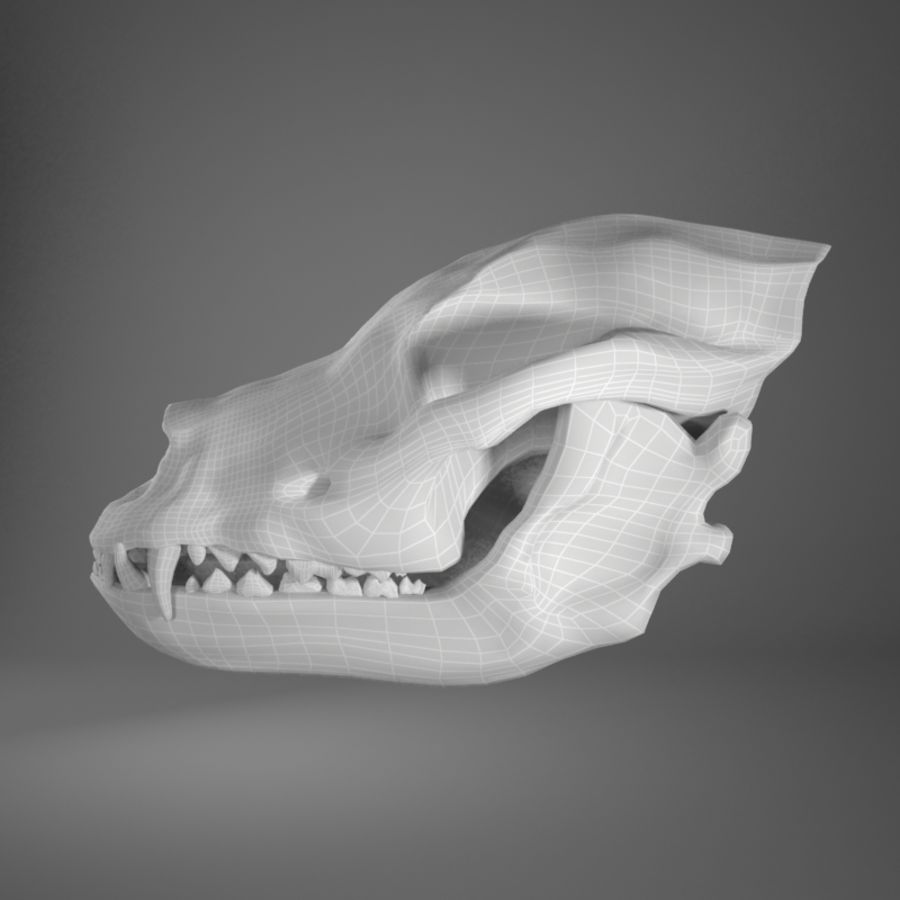 Dog skull royalty-free 3d model - Preview no. 8