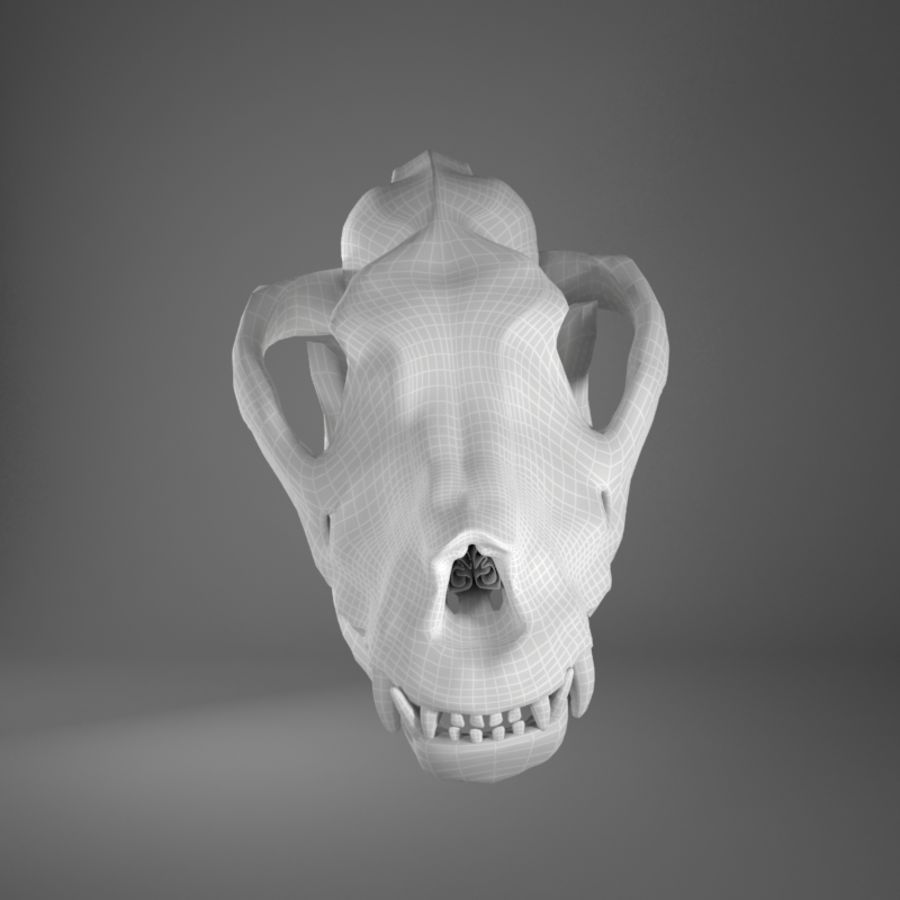 Dog skull royalty-free 3d model - Preview no. 6